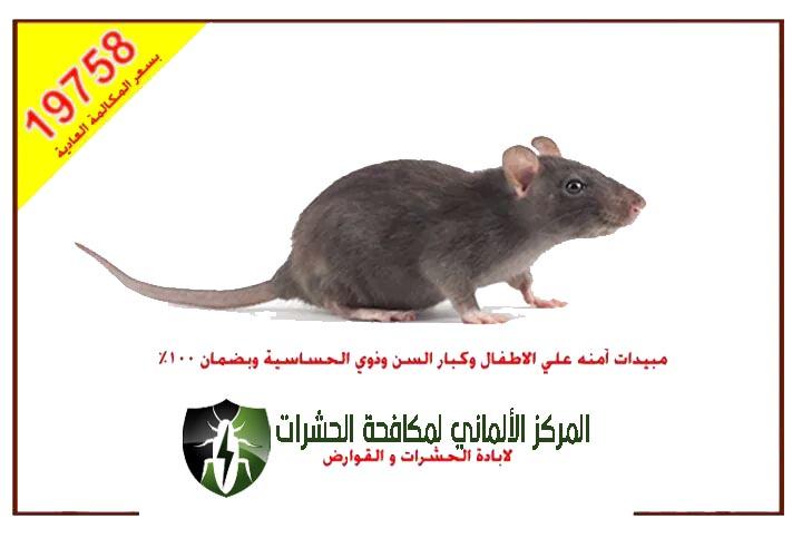 افضل شركة مكافحة الفئران